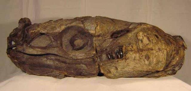 Dakosaurus Lat20Da