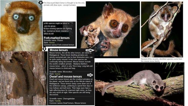 lemurs-2012