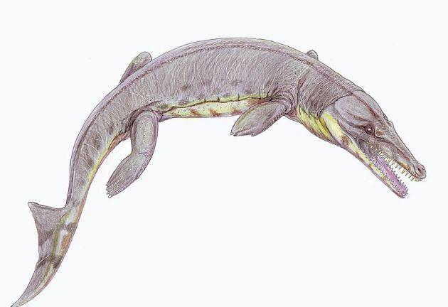 Metriorhynchus1