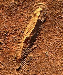 nat-fossil2310
