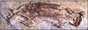 ng-fosil