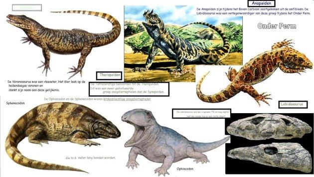 onderperm-reptielen-