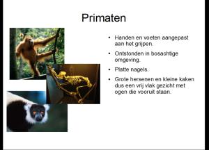 primaten1