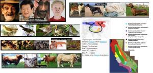 ringspecies  &  subspecies