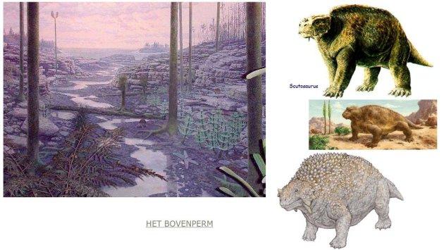 Scutosaurus-het-bovenperm-