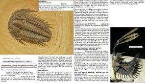 Trilobiet-De-Morgen-