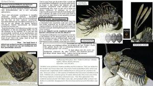 trilobites-2-De-Morgen