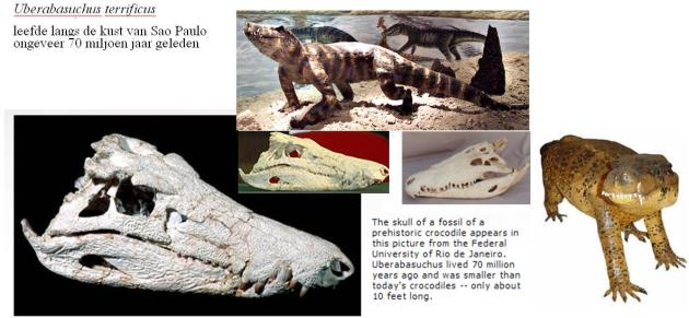 Uberabasuchus terrificus, 1