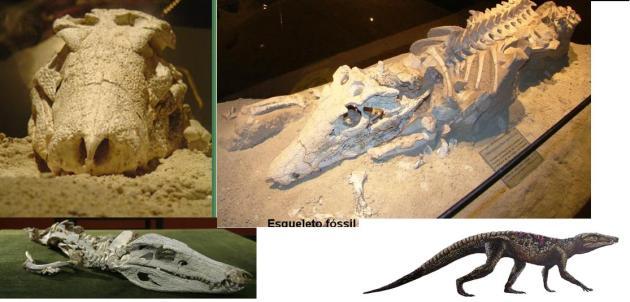 Uberabasuchus-terrificus-2