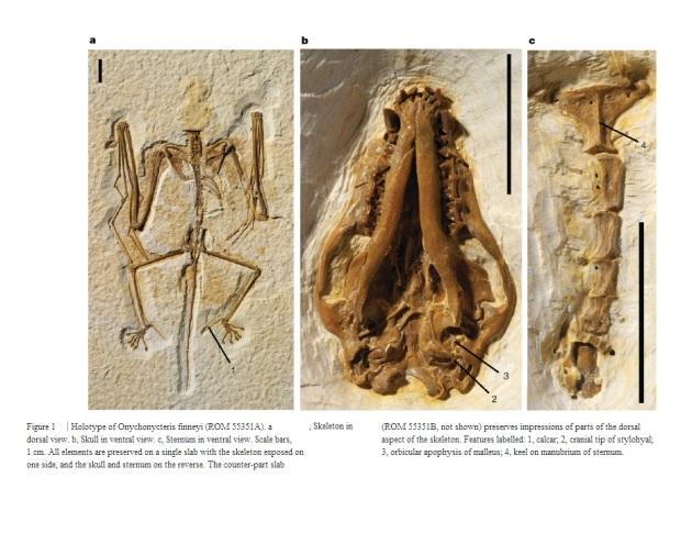 vleermuis finney