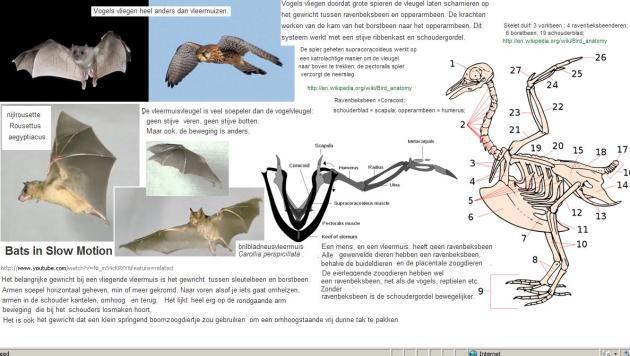 Vleermuisvleugels