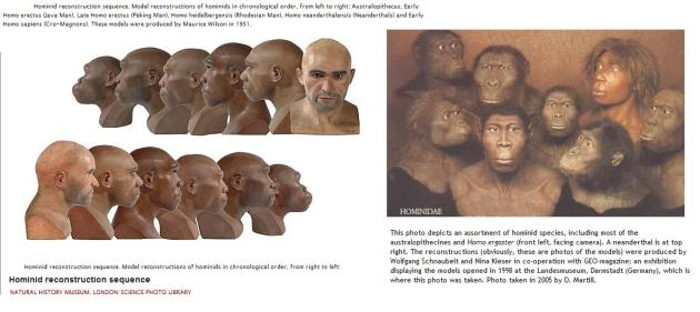Hominids heads  reconstructions