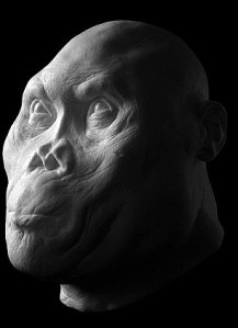 homo rudolfensis head reconstruction