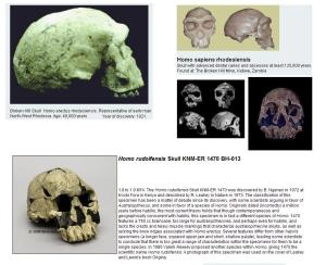 Homo rudolphiensis