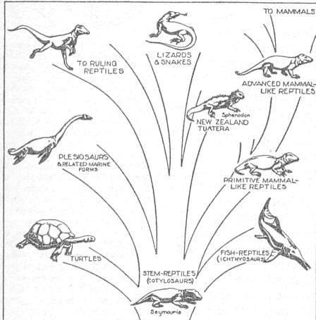 I10-31-reptiles