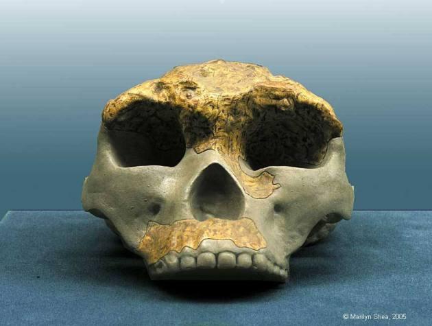 lantian  man Paleolithic_6761crw