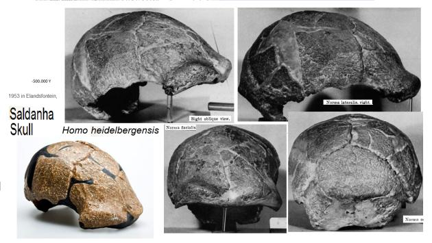 saldanha skull