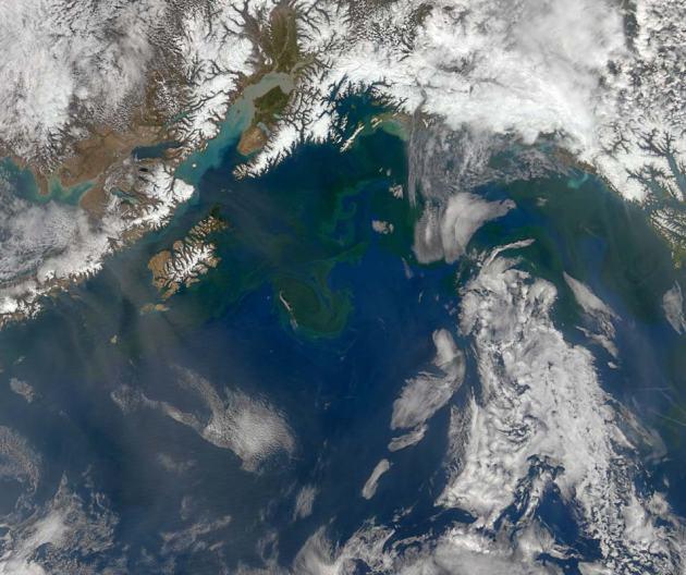 Lente in alaska fytoplankton1