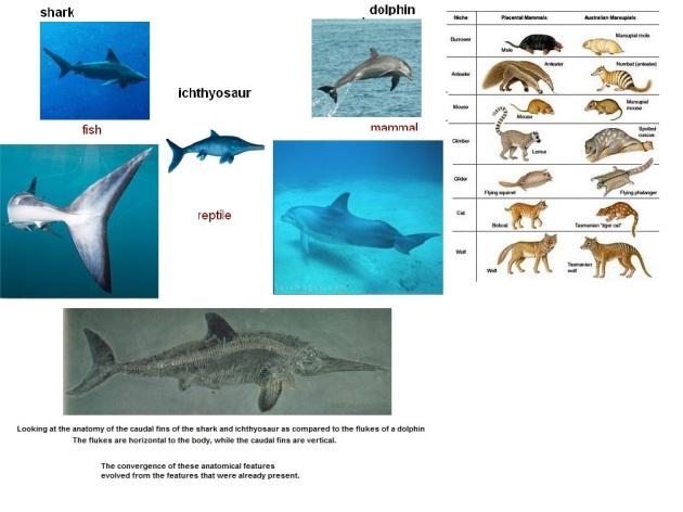 shark, ichtyosuarus , dolphin