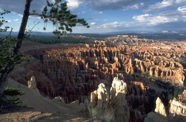 Ampitheater   Utah, Bryce-Canyon-Nationalpark,  64131282