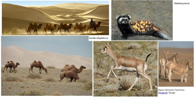 Dieren uit de Gobi