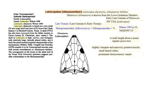 Latiscopidae  almasaurus