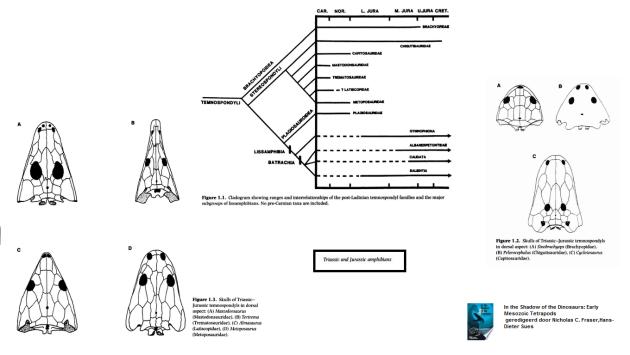 Temnospondyls trias and jura
