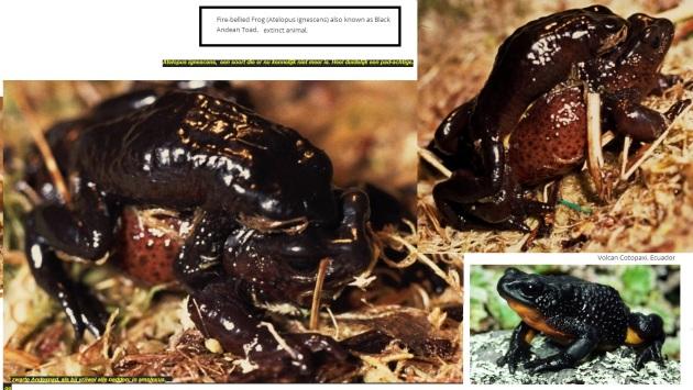 zwarte andespad