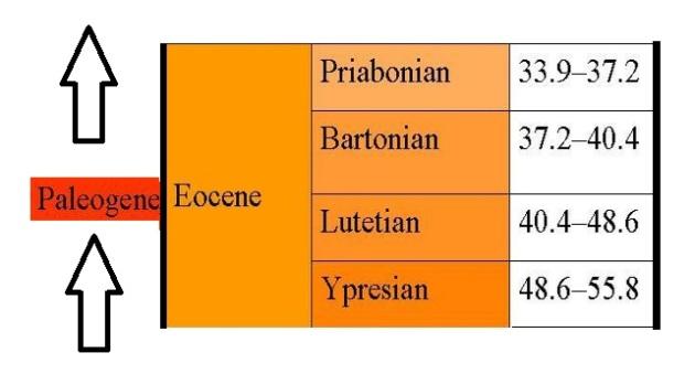 eoceen