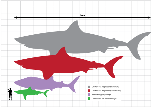 Megalodon_scale