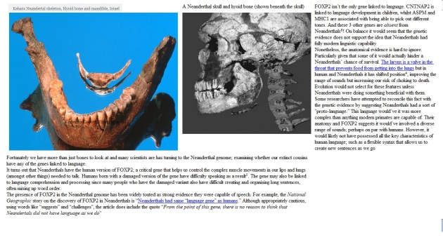 neanderthal hyoid bone