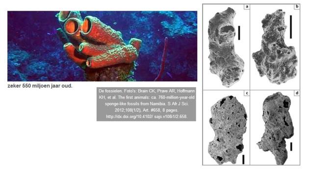 fossielen uit Namibie