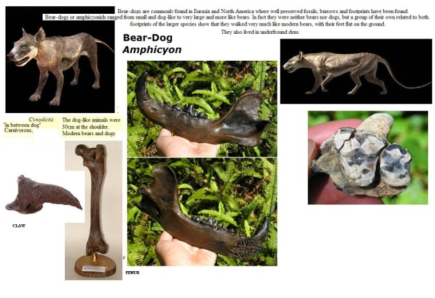 bear dogs amphicyonids