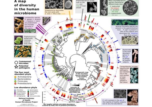 diversity human microbiome