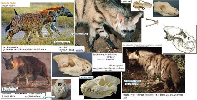 extante soorten