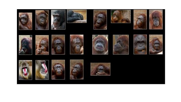 primaten gezichten