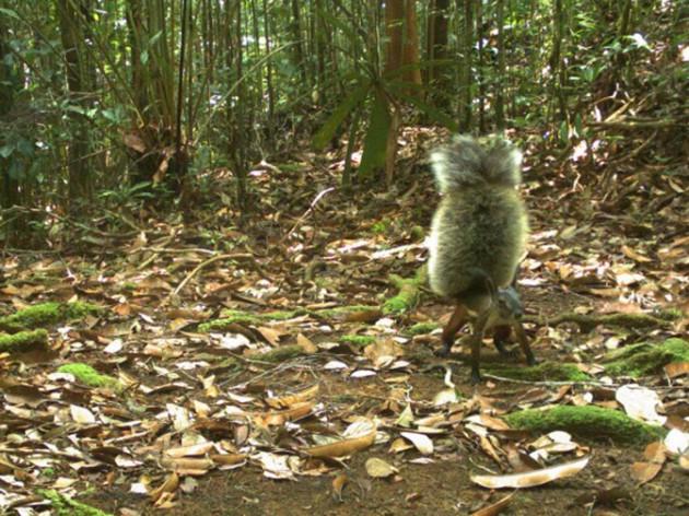 2014 sn-vampire squirrel_0